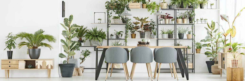 Les meilleurs endroits pour te procurer des plantes